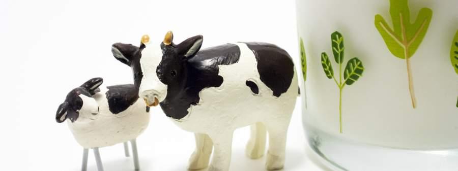 牛乳のひみつのイメージ画像